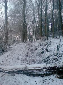 hillsborough forest in snow