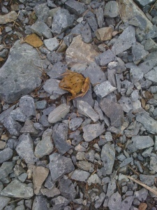 a tiny brown frog on some stones