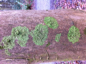 Circular moss patterns on the side of a tree
